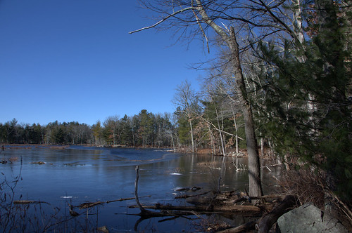 bradfordpond massachusetts ice frozen reflection blue landscape tree nature haroldparker tranquility cold winter