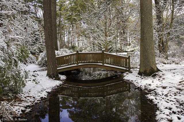 First Snow at Norfolk Botanical Garden