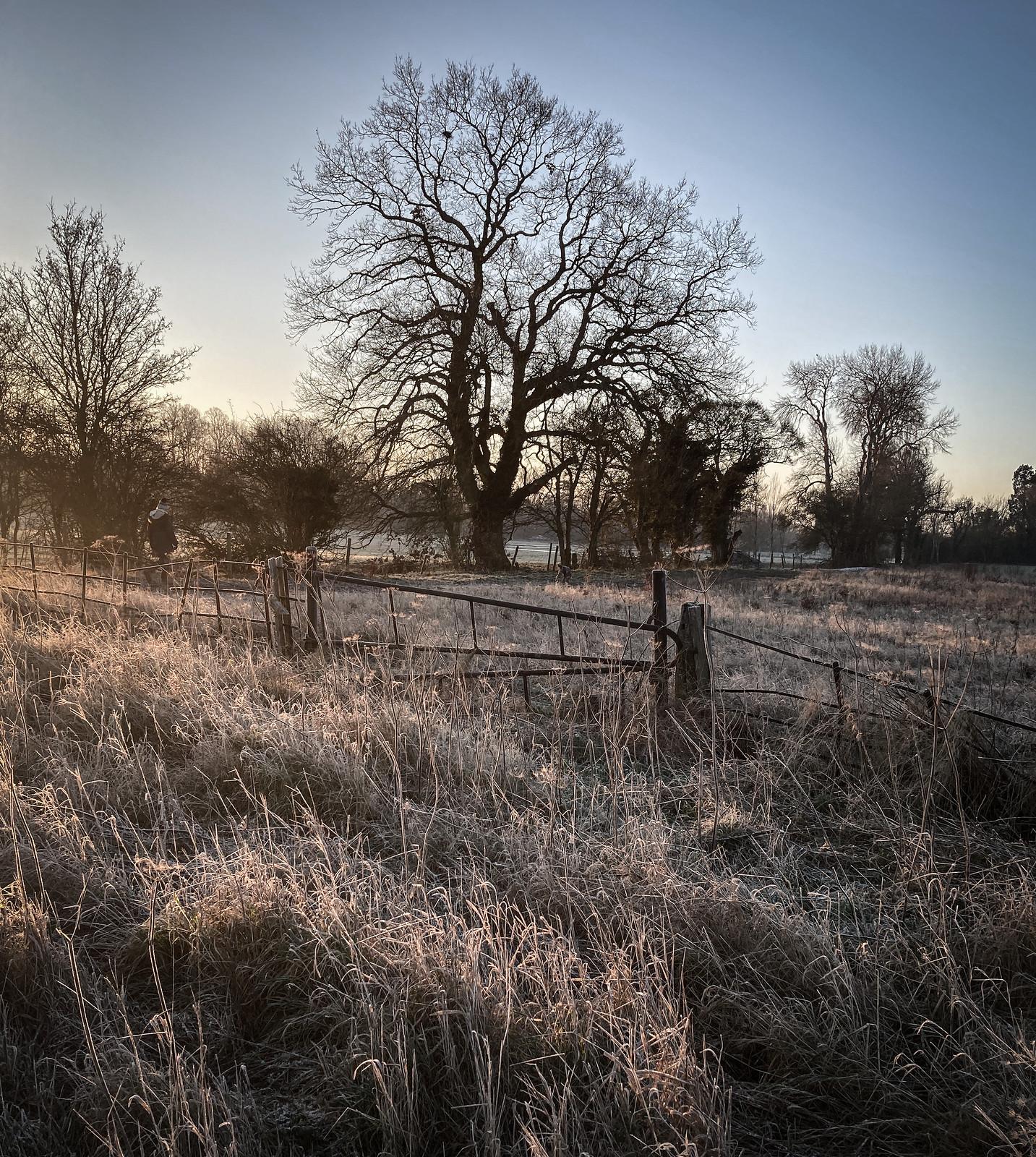 Frosty tree field