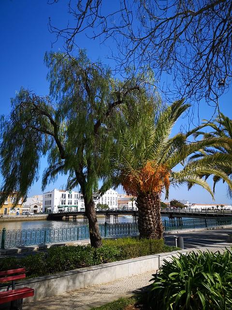 Río Gilao y Puente ponte das Forcas Armadas flora en Jardim do Coreto parque publico Tavira Algarve Portugal