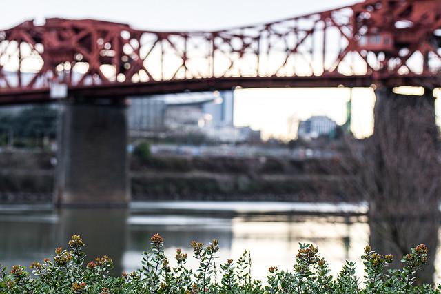 Riverbank Bushes & Broadway Bridge
