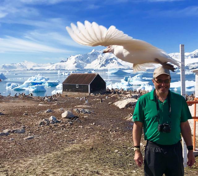 Antartica Snowy Sheathbill (Shit Chicken is nickname)