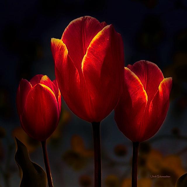 E285 Blumen, Flower