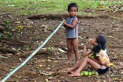 Ramassage de mangues - Tonga