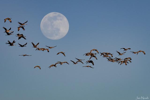 Lunar Fly By