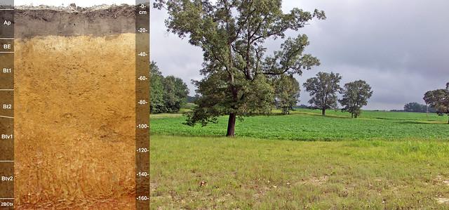 Dothan soil and landscape