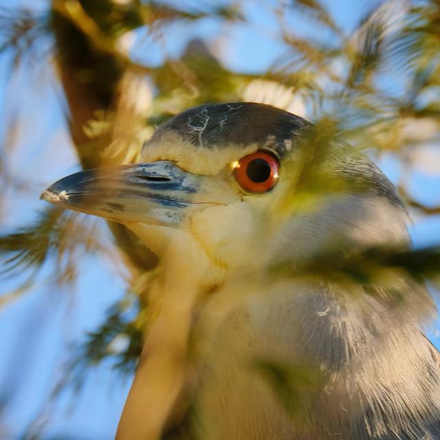 Headshot: Nicht Heron