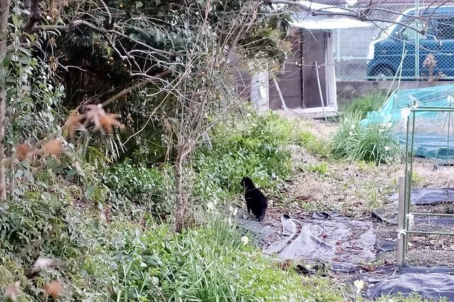 Today's Cat@2021−01−29