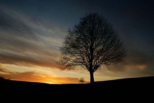 Arbres au lever du jour / Trees at sunrise (6)
