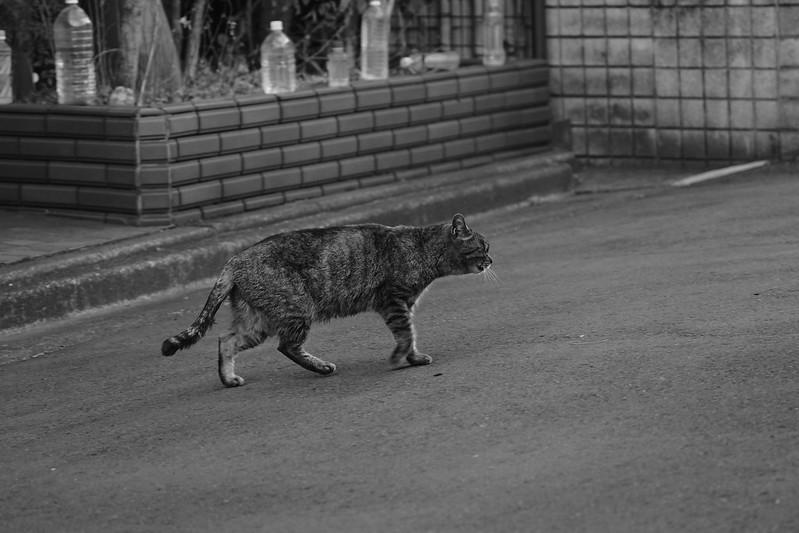 44Sony α7Ⅱ+TAMRON 28 200mm f2 8 5 6 RXD+Black Mist東池袋春日通りに抜ける路地の猫 キジ虎