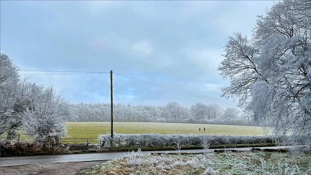 Ashridge Frost