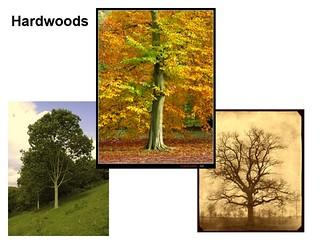 """Bob Behnke """"History of Trees"""" February 2021 Newsletter"""