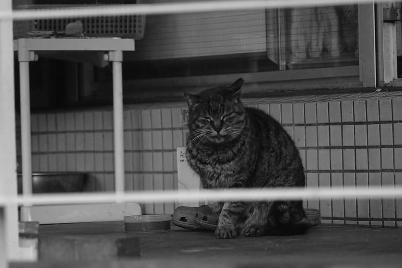 08Sony α7Ⅱ+TAMRON 28 200mm f2 8 5 6 RXD+Black Mist池袋一丁目昭文社印刷所の猫 キジ虎
