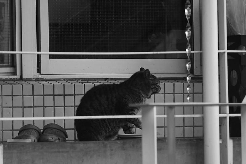 07Sony α7Ⅱ+TAMRON 28 200mm f2 8 5 6 RXD+Black Mist池袋一丁目昭文社印刷所の猫 キジ虎