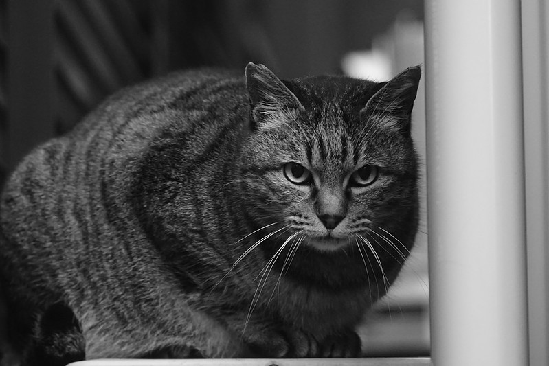 05Sony α7Ⅱ+TAMRON 28 200mm f2 8 5 6 RXD+Black Mist池袋一丁目路地の猫 キジ虎