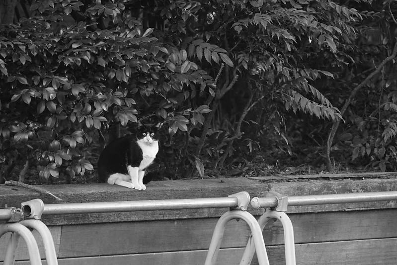 17Sony α7Ⅱ+TAMRON 28 200mm f2 8 5 6 RXD+Black Mist東池袋中央公園の猫だまり 黒白八割れ
