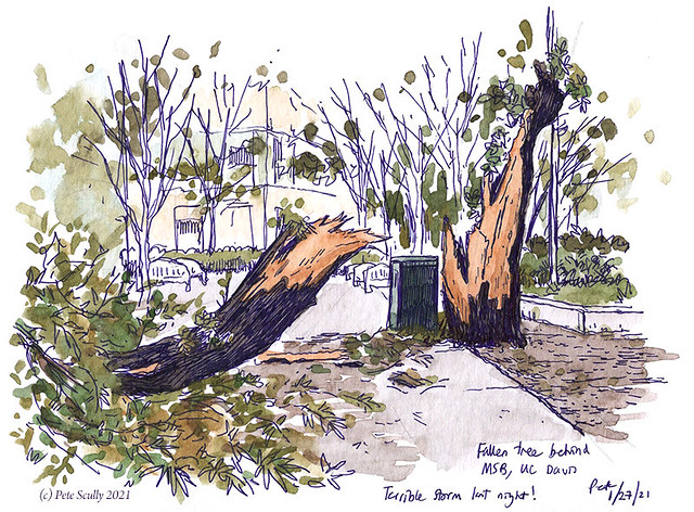 fallen tree behind MSB 012721 sm