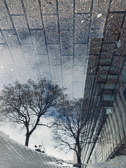 Croydon Reflection - trees and lines