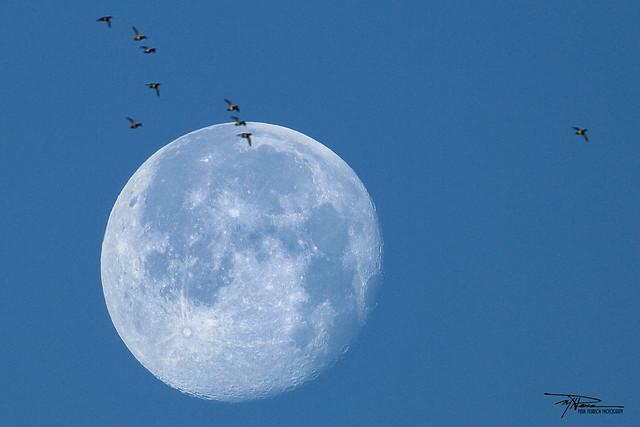 Setting moon - Jan 30, 2021