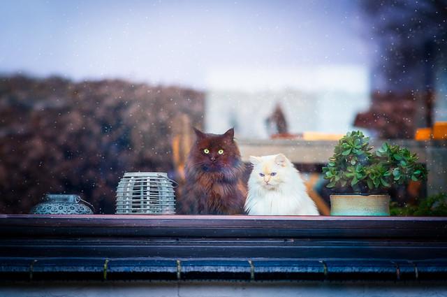 Arturo & Blanche, the quarantaine Life