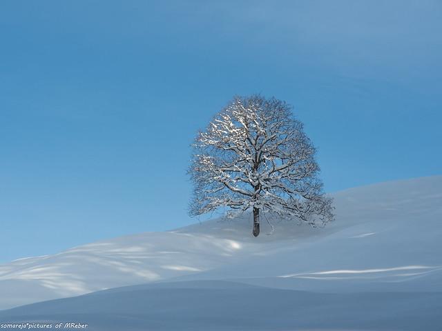 Baum im Winterkleid -Explore 31.1.2021 - Vielen Dank!
