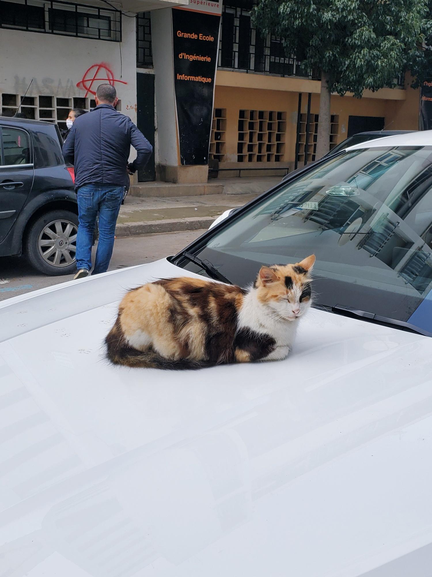 Rabat cat