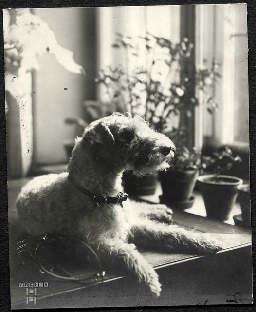 ArchivTappen2AAl2d620 Hund, Fotoalbum, 1899-1930er