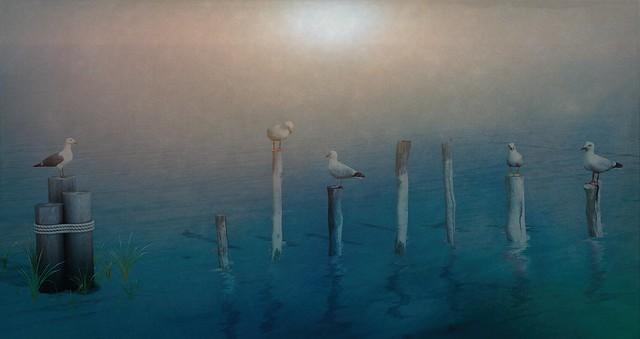 Hello guys, again us: beautiful seagulls :)