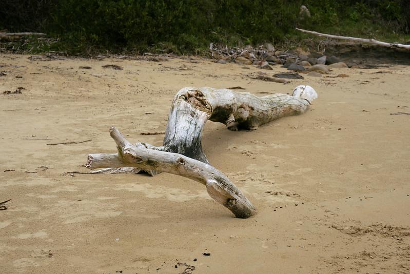 Driftwood, Tilbury Cove