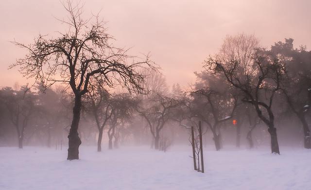 early winter mornings