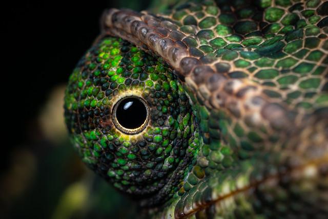 Chameleon Eye (Explored)