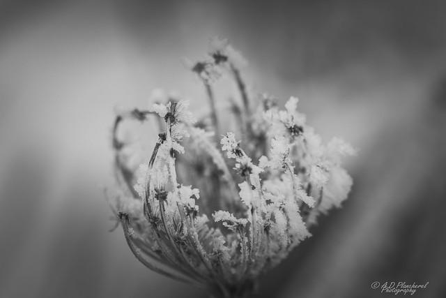A cold, dead embrace