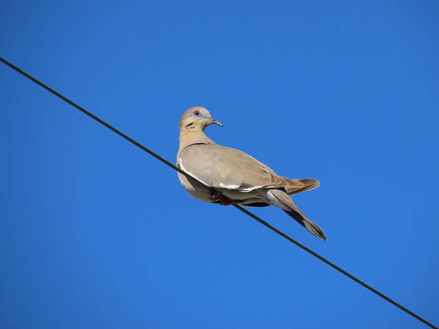 On A High Wire
