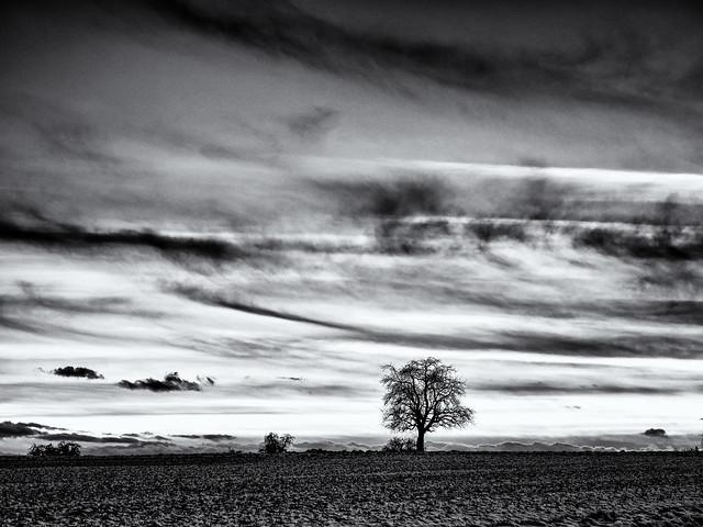 Lonesome...