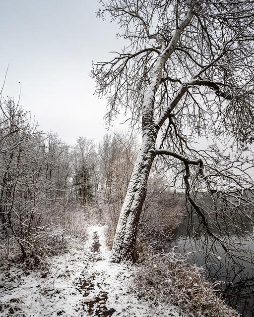 Winter - Dechsendorfer Weiher - 9464
