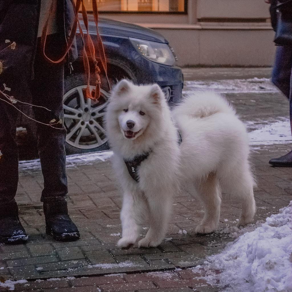 Oчень милая собака.  Улыбочку 😄 DSC_9987