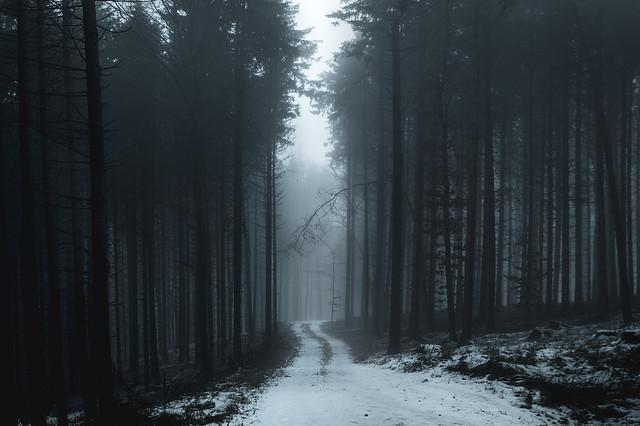 Lass uns im Wald spazieren gehen...