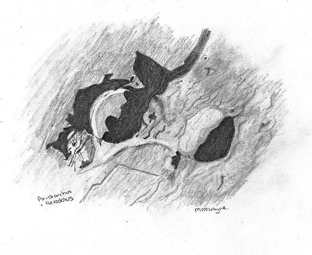 Aristarchus & Herodotus Pencil Sketch