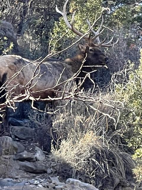 Elk Lincoln National Park