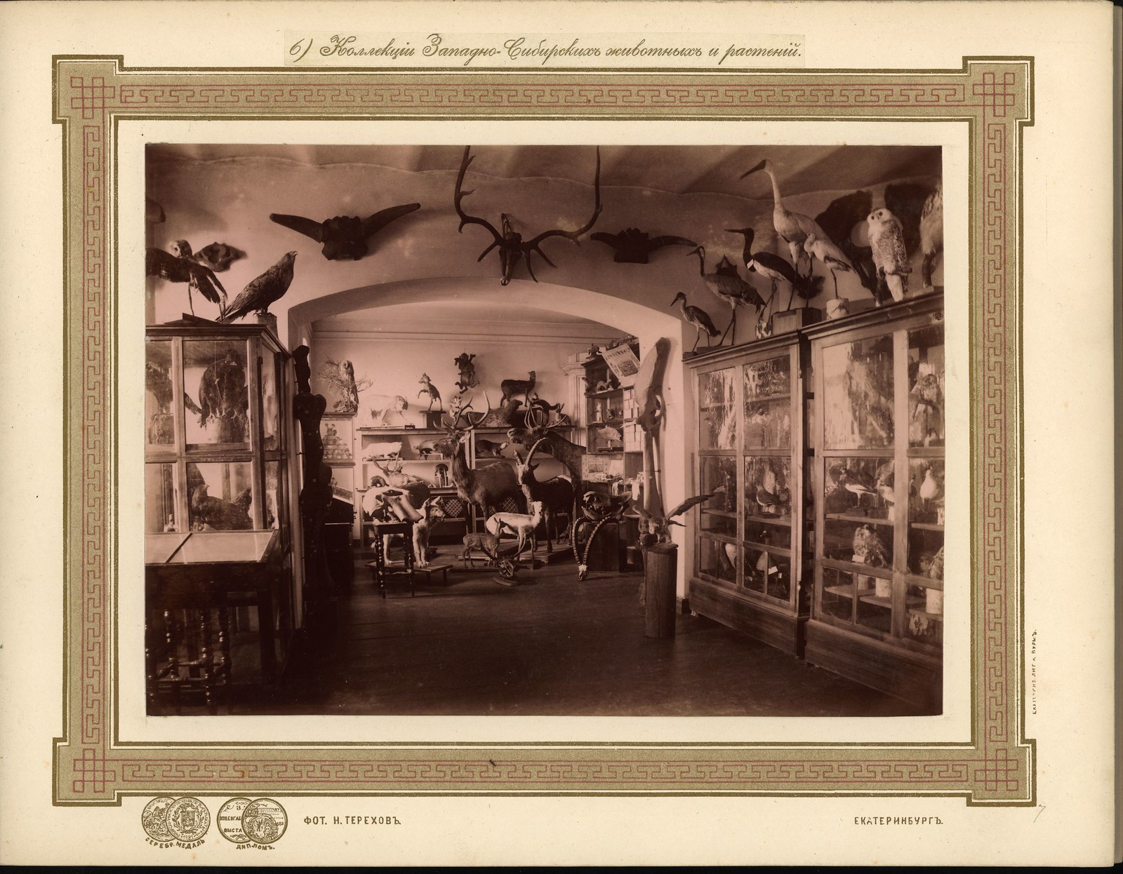 07. Коллекция западносибирских животных и растений