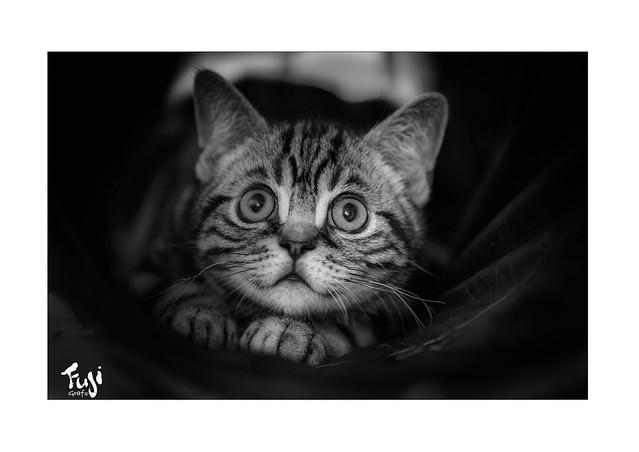 Filou Black & White