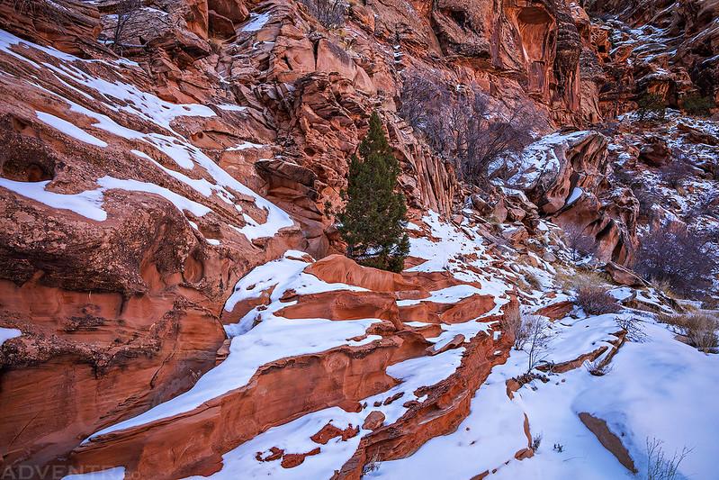 Winter Canyon Scene