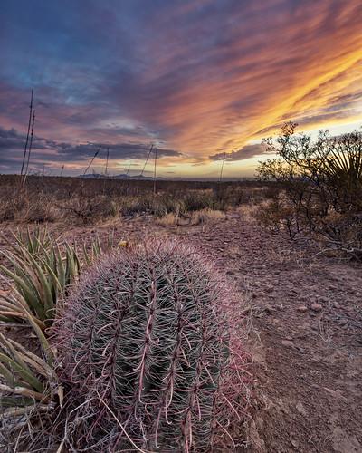 cactus elpaso texas desert southwest landscape sunset sonya7riii canonef1635mmf4lisusm sigmamc11