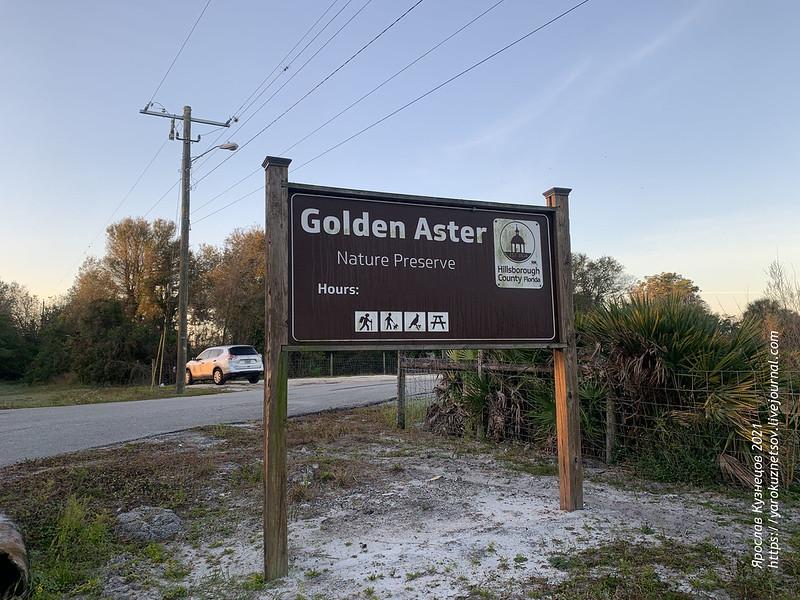 Заповедник с редкими сойками Golden Aster Scrub Preserve 30.01.2021 w8057