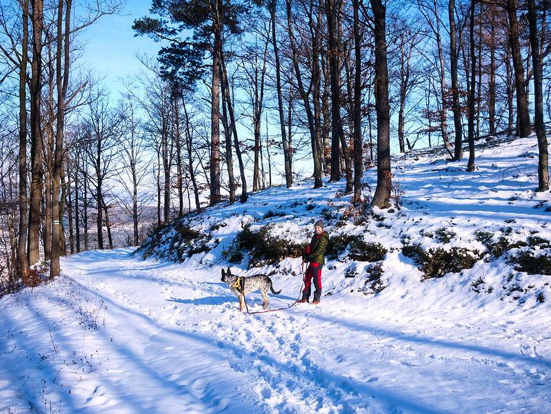 pies zimą górach