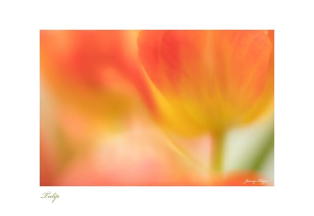 Tulip     ( Explored )