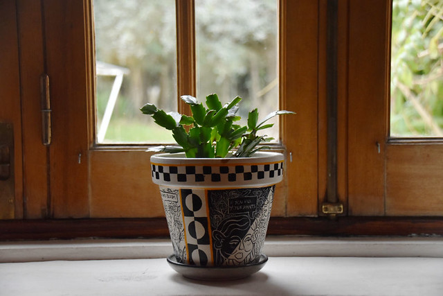 Windows and Emily's plant pot