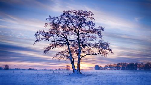 fischerhuderwümmeniederung tree snow sunset sonya7iii ilce7iii sonnartfe55mmf18za baum schnee sonnenuntergang landschaft landcsape himmel sky
