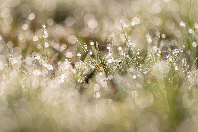 Beautiful morning glitter world in the grass