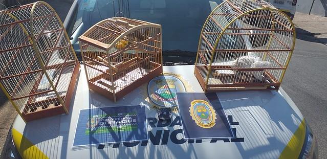Data. 01/02/2021. Patrulha Ambiental da Guarda Municipal. Fotos: Divulgação/PBH